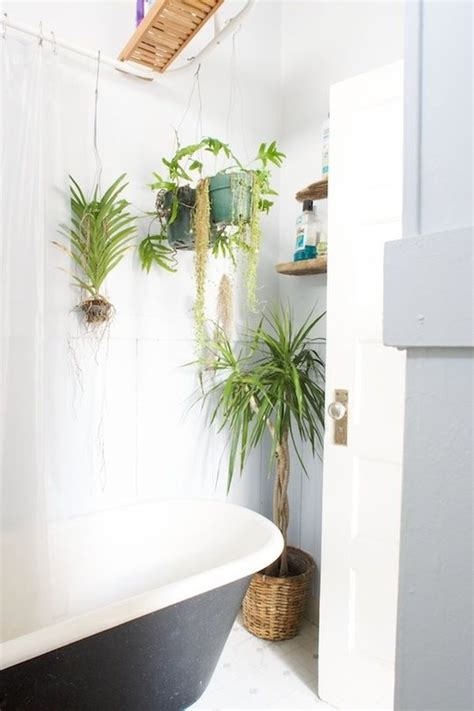 indoor plants bathroom gorgeous indoor plants for bathroom decorating