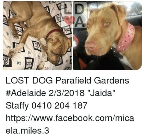 Lost Dog Meme - lost dog parafield gardens adelaide 232018 jaida staffy
