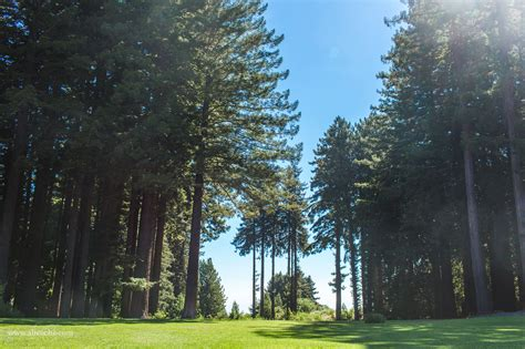 affordable wedding venues san francisco bay area 16 amazing wedding venues with redwoods in the san