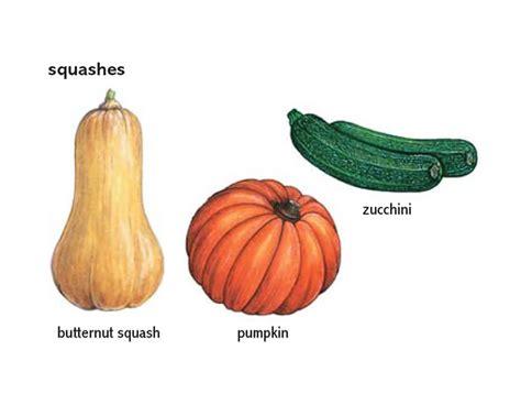 vegetables definition butternut squash noun definition pictures