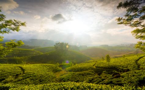 wallpaper for walls kerala munnar hills kerala india wallpapers hd wallpapers id