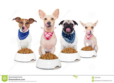 cute dog eating from bowl stock photo image 61440749 hungry dogs stock image image of background cute lick