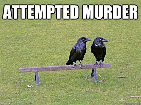 Crow Meme - attempted murder crow humor quickmeme