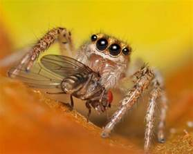 what do barn spiders eat the infinite spider a science and nature for