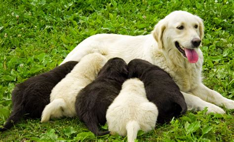 can puppies drink whole milk calcium needs for dogs and puppies care