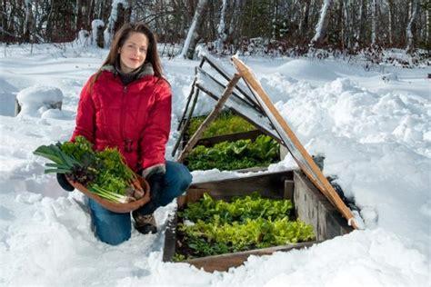 winter gardening harvesting tips  niki jabbour hgtv