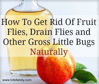 how to get rid of gnats in bedroom 25 best ideas about fruit fly spray on pinterest what