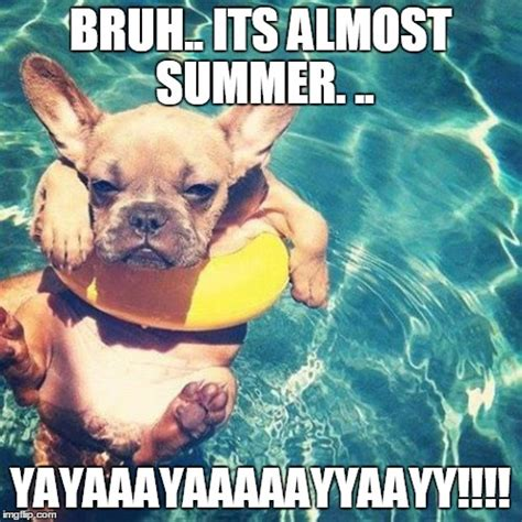 Summer Meme - summer is here dog pug imgflip