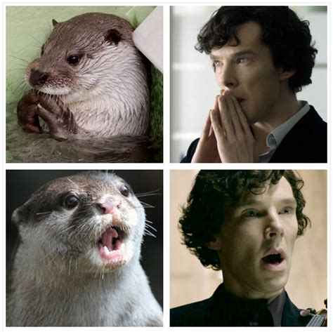 Cumberbatch Otter Meme - benedict cumberbatch imitated an otter and then punched a