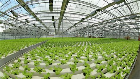 wallpaper of green house growing herbs and vegetables in the greenhouse stock