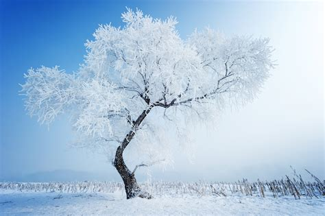 snow tree winter nature wallpaper 5600x3726 433502