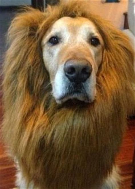cheap haircuts toms river nj best dog costumes