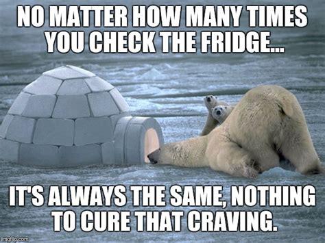 Polar Bear Coke Meme - how many times a day do you check the fridge imgflip