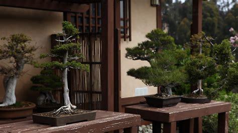 case   stolen bonsai trees kpbs