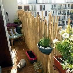 Balcony Screening Plants by Best 25 Balcony Privacy Screen Ideas On Pinterest