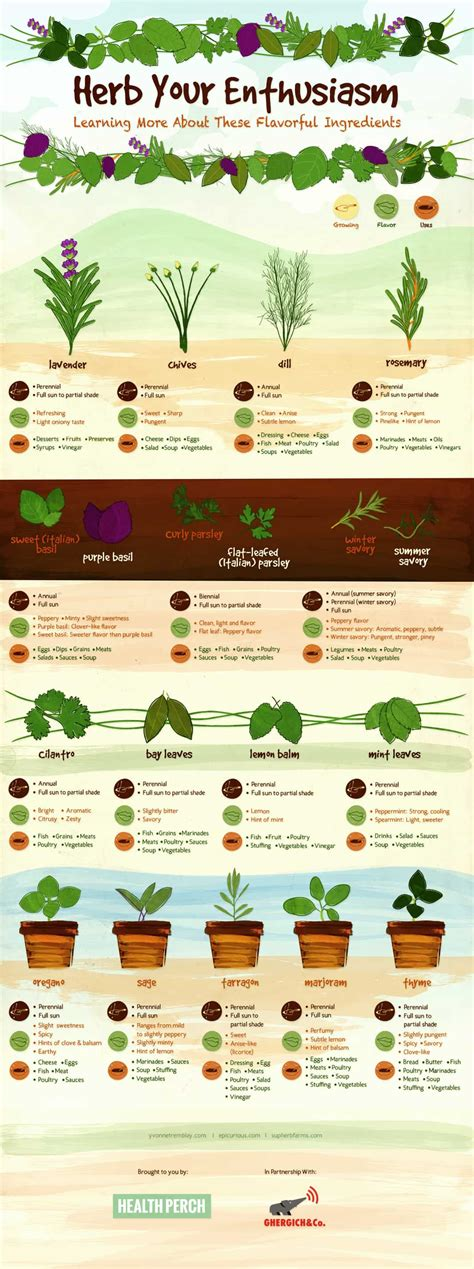 herb growing chart using flavorful culinary herbs herbal academy of new england