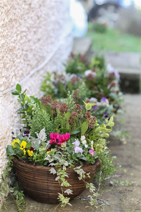 hanging baskets autumn and winter pinteres