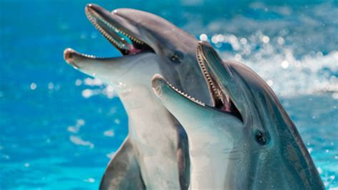 dolphin talk how we can talk with dolphins in 5 easy steps age books circulatory dolphins