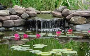koi fish pond design ideas for garden home trendy
