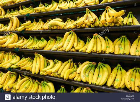 Shelf Of Bananas unwrapped bananas displayed on shelf at tesco supermarket