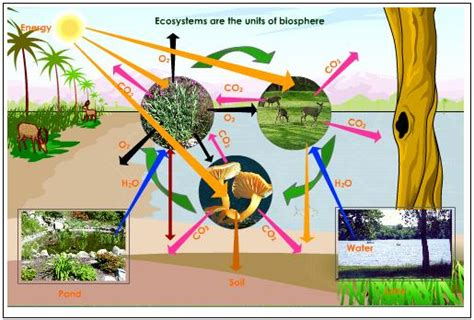 Biotic Garden What Are The Two Components Of Our Environment