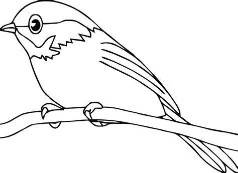 american robin coloring page american robin coloring page how to draw robin bird