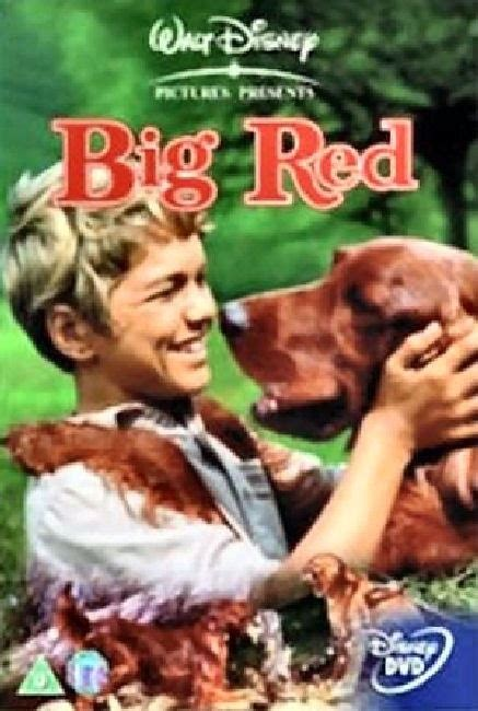 irish setter dog movie 20 best big red setter books images on pinterest irish