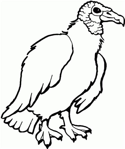 turkey vulture coloring page turkey drawing pictures cliparts co