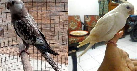 gambar burung falk gambar