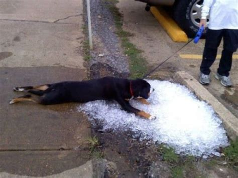 it s hot out funny images damn it s hot outside 33 pics izismile