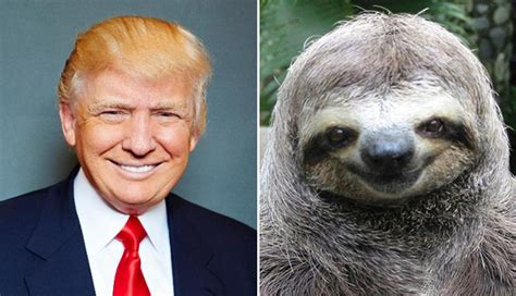 donald trump looks like 19 things that look just like donald trump s famous hairdo