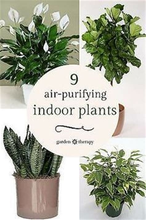 plants for windowless bathroom 19 best images about house stuff on pinterest diy home
