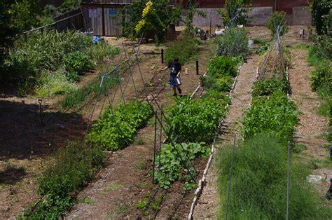 Raised Beds Vs Rows Dog Island Farm Raised Rows Vegetable Garden