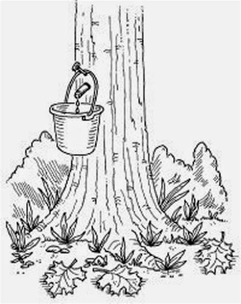 rubber tree coloring page reskilled and revitalized backyard maple syrup production