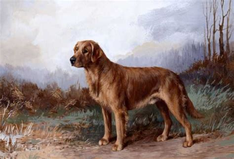 origin of golden retriever dogs golden retriever history history