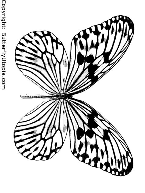 complex butterfly coloring pages 8 images of complex butterfly coloring pages printable