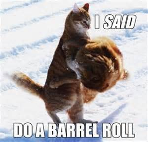 Funny cat fight