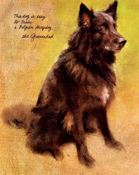 belgian sheepdog puppies belgian sheepdog print poortvliet ebay