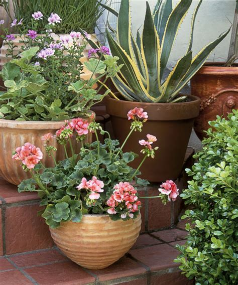 Patio Plants Ideas by Outdoor Potted Plants Gardening Guide
