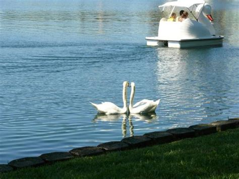 swan boats orlando fl la vista del lago picture of lake eola park orlando swan