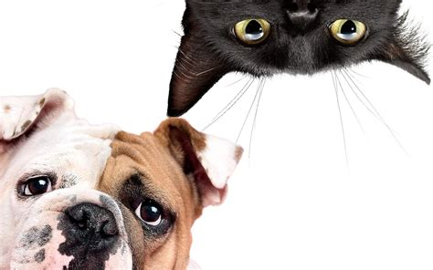 dogs and cats pet questions tips about cats dogs