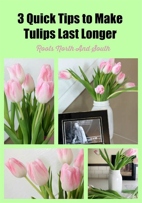 3 tips to make tulips last longer roots south