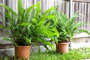 how to repot a fern small notebook
