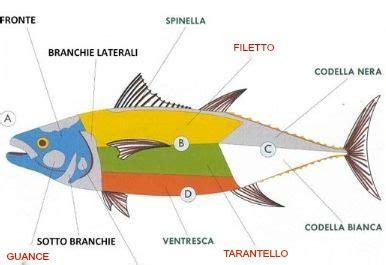 come cucinare il tonno rosso come cucinare il tonno rosso le sue parti e come cucinarle