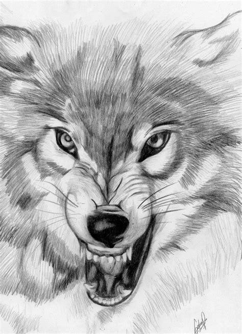 imagenes a lapiz de lobos dibujos de lobos a lapiz faciles imagui