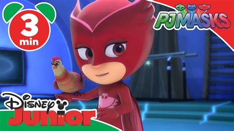owlette gets a pet pj masks books pj masks owlette s feathered friend disney junior uk