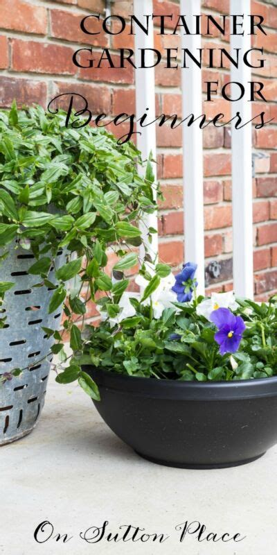 container gardening for beginners flowers ebay