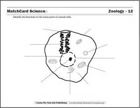 cell worksheets for 7th grade science 7th grade life