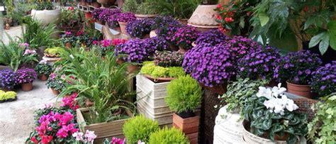 vivai piante e fiori il nostro vivaio a roma vivai balduzzi