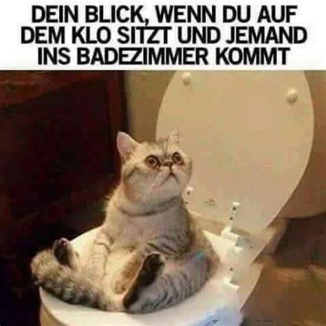 Katzen Meme - 1000 ideen zu katzen memes auf pinterest lustiger katze